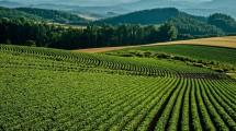 農業 お金を貯める