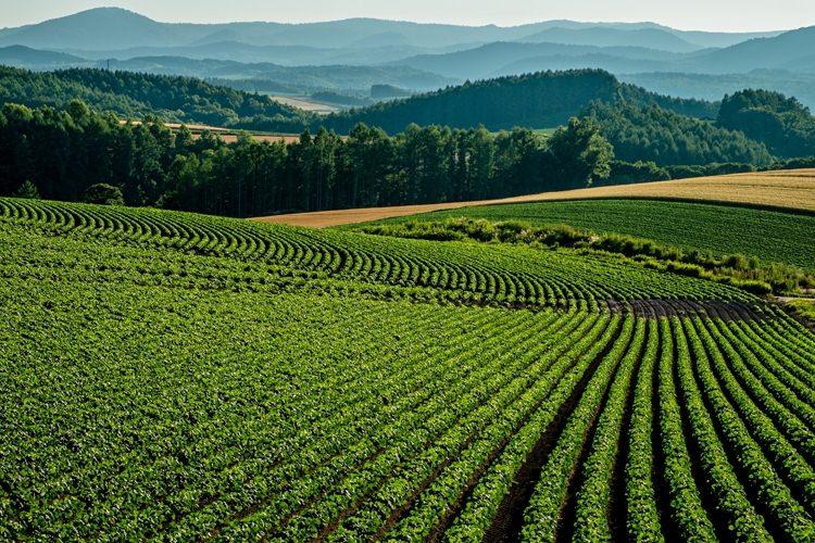 農業で節税