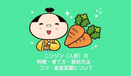 ニンジン(人参)の特徴・育て方・栽培方法・コツ・家庭菜園について