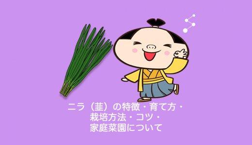 ニラ(韮)の特徴・育て方・栽培方法・コツ・家庭菜園について
