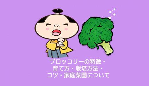 ブロッコリーの特徴・育て方・栽培方法・コツ・家庭菜園について