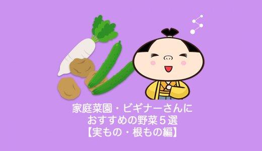 家庭菜園・ビギナーさんにおすすめの野菜5選【実もの・根もの編】