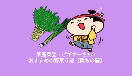 家庭菜園・ビギナーさんにおすすめの野菜5選【葉もの編】