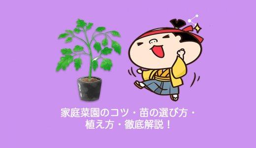 家庭菜園のコツ・苗の選び方・植え方・徹底解説!