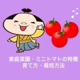 家庭菜園・ミニトマトの特徴・育て方・栽培方法
